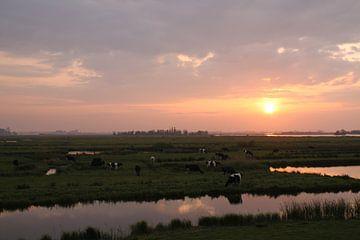 Zonsondergang met koeien  van Ruud Wijnands