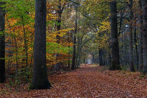 Fall Path In The Forest van William Mevissen