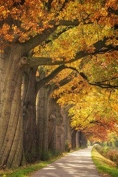 Herfstkleuren van Martin Podt