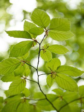 Fris groen beukenblad van Maaike Munniksma