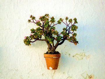 Vetplant aan de muur sur Frans Jonker