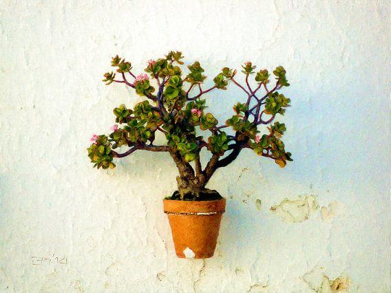 Vetplant aan de muur van Frans Jonker