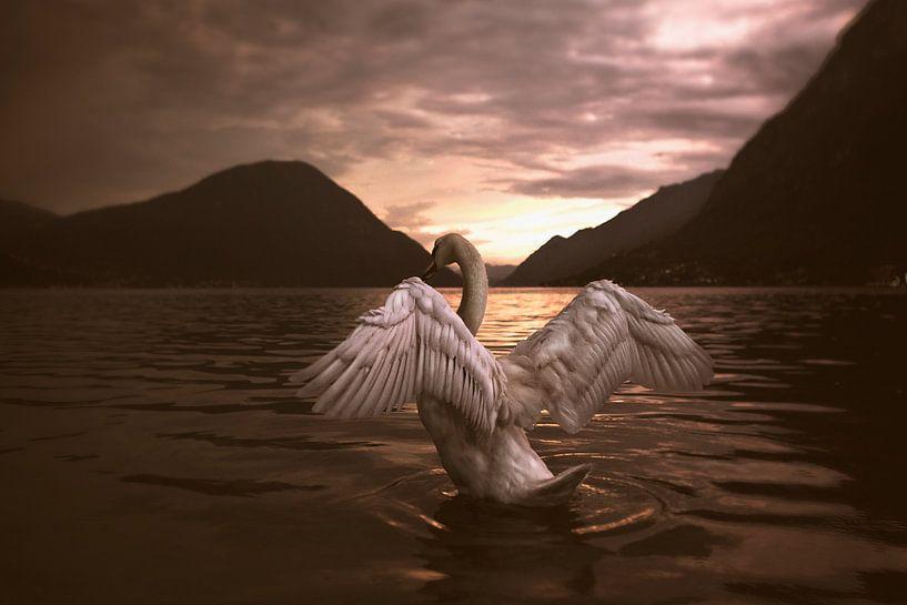 Queen of the lake von Peggy Saffrie
