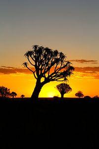Kokerbomenwoud  in Namibië van Edith Büscher