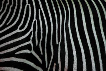 Zebra textuur close-up. Zwart-witte zebrahuid. van Michael Semenov