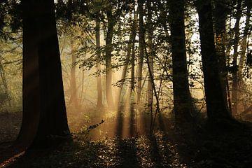 Het bos in de ochtend van matthijs iseger