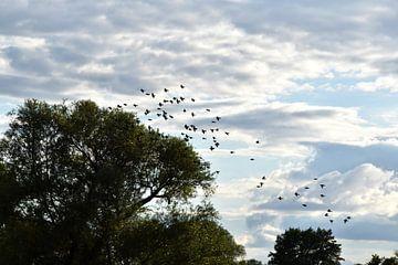 Vögel im Flug von Marcel Ethner