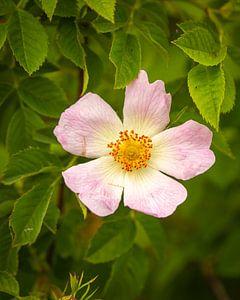 schöne Blume von Stuart De vries