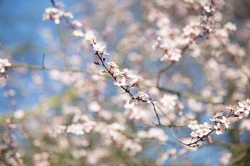 Frühlingssüß von Voorbeeld Fotografie
