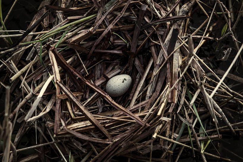 Vogelnest van Martzen Fotografie