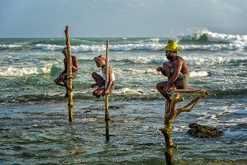 Paalvissers, Sri Lanka van Richard van der Woude