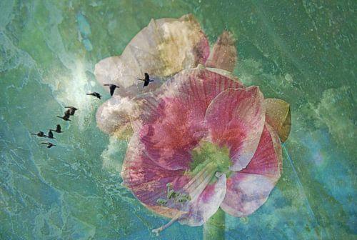 Amarillys Birdys van Die Farbenfluesterin