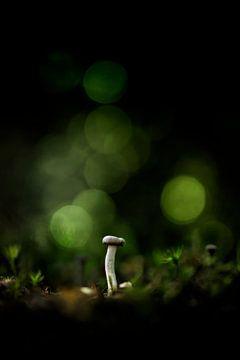 Green Light van Bob Daalder