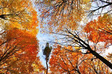 Oranje bladerdak van Corinne Welp