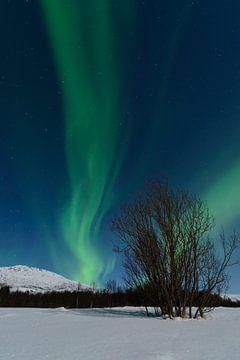 Noorderlicht of poollicht boven Senja in Noord Noorwegen van