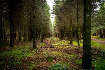 Het bos van de vrijheid van Jennifer Geerlings