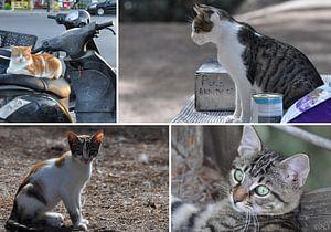 De katten van Kos, Griekenland van