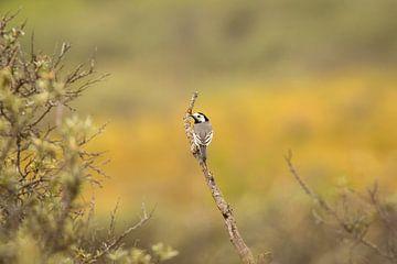 Schöner kleiner Vogel auf einem Zweig von Marcel Alsemgeest