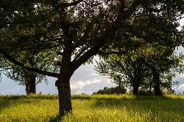 Boom in zonnig groen landschap von Matthijs Damen