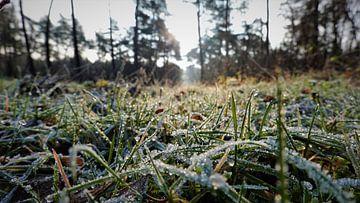 Frozen time van Jacco Aalbers