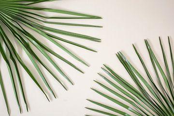 Palm (blad) van Jeantina Lensen-Jansen