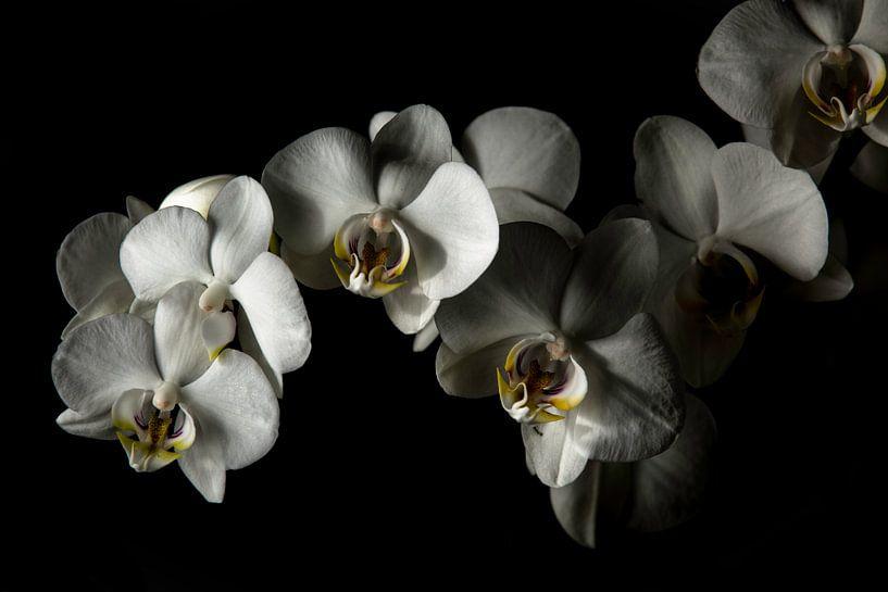 Orchids von Yannick Roodheuvel