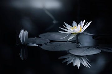 Reflection, Takashi Suzuki van 1x
