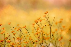 Pleasant Yellow van Hiske Boon