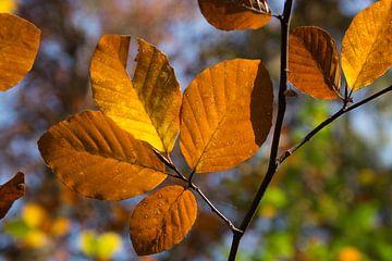 Goldbraune Blätter