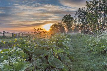 Sonnenaufgang mit Nebel! von Rossum-Fotografie