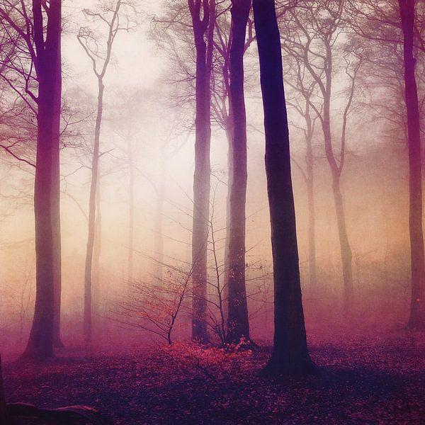 mysts - foggy forest in morning light van Dirk Wüstenhagen
