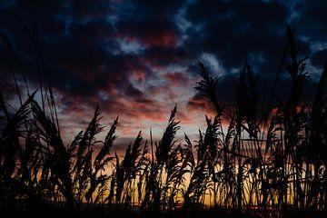 Farbe am Himmel von Lies Callemeyn