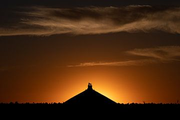 zonsondergang bij de Leeuw van Waterloo