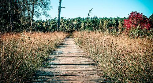 houten pad in het eerderbos in ommen