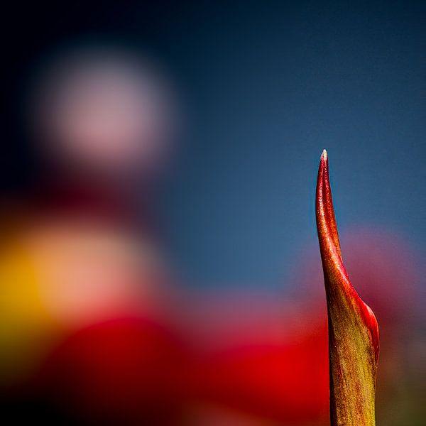 een stukje tulp van Dick Jeukens