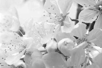 Bloemen High Key von Tanja de Boer