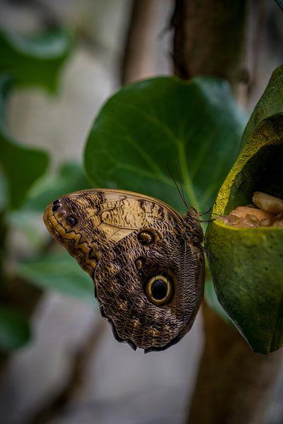Vlinder van Arjen Dijk