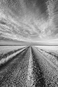 Der Weg von Christophe Castillon