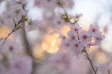 Blumen Teil 83 von Tania Perneel