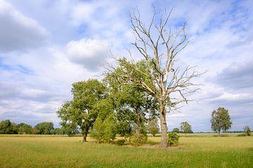 Bäume auf dem Feld von Johan Vanbockryck