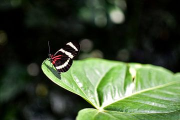 Vlinder van Nadine Rall