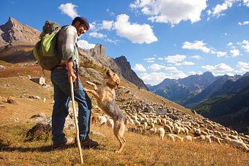 Schäferhund mit Hund im Valle Maira von
