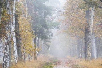 Nebliger Traumwald. Hintergrundbild . von Saskia Dingemans