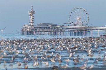 Overvol strand met meeuwen met de Scheveningse Pier op de achtergrond van Anne Zwagers