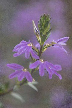 Rosa Blume von Marianne Twijnstra-Gerrits