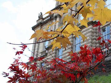 Zweige mit gelben und roten Blättern zum Bauen in Edinburgh von Monrey