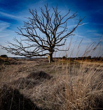 Dode boom van Maarten van Loon