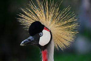 Starende kraanvogel close-up van Quint Wijnhoven