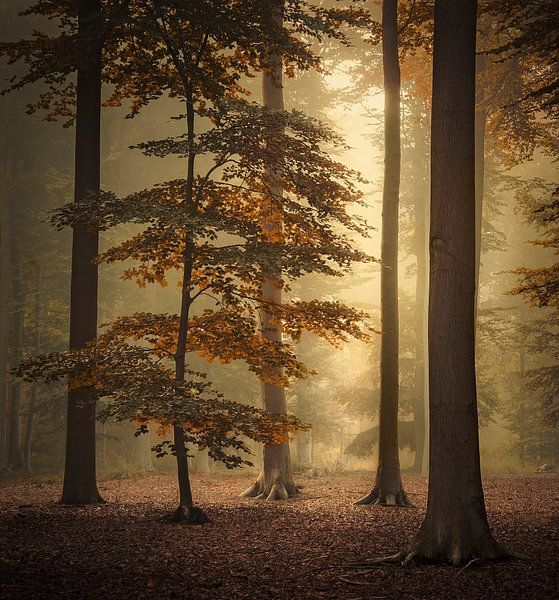 Hidden beauty van Rob Visser