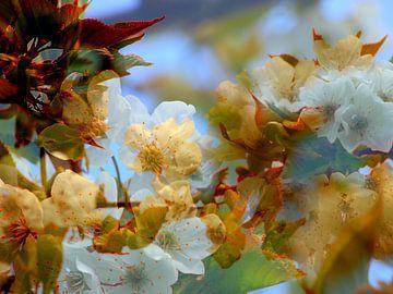 Kirschblüte von Anita Snik-Broeken